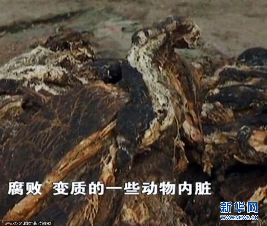 腐败动物内脏炼成新型地沟油