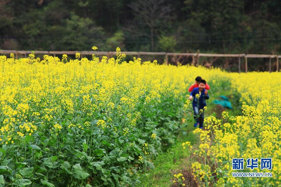 东北春天山里野花风景图片